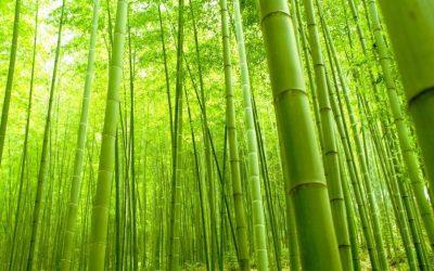 Ethical Clothing, Bamboo Clothing
